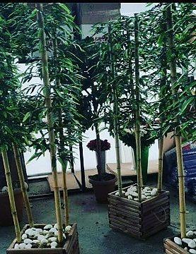 Ahşap Saksıda Bambu